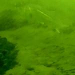 春直前?!大人気の本牧づり施設(本牧海釣り公園)で釣り動画を撮ってみました。|海釣り公園釣り動画