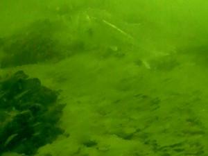 本牧海づり施設 釣り動画 シーバス