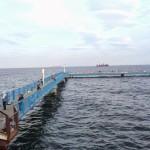 桜前線到来!魚も釣り場に到来?本牧海づり施設に釣りに行ってみました。