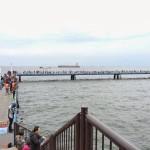 雨水の影響で魚は釣れるのか?!休日は大混雑の本牧海づり施設に釣りに行ってみました。
