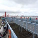 雨水の影響で珍客に遭遇?投げ釣り、落とし込み釣りの釣果は?!状況が悪い中、大黒海づり施設に釣りに行ってみました。【前編】