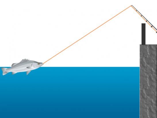 魚を手前まで寄せる