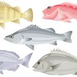 春まで待てない!3月から何を釣る?読者が決める人気ランキング(ターゲット編)
