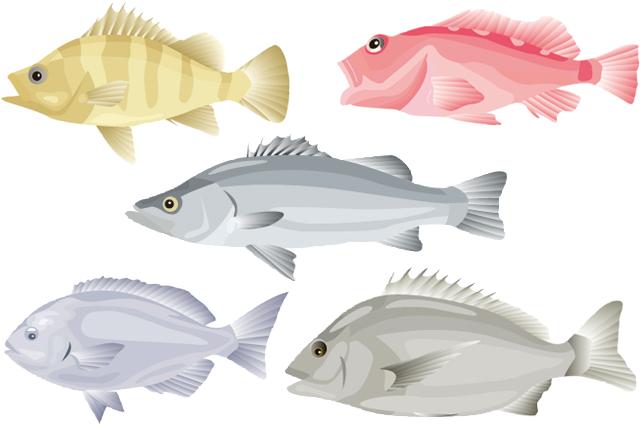 魚種人気ランキング