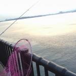 長潮の湾奥へ短時間釣行!若洲海浜公園へ夕マズメ狙いで釣りに行ってみました。