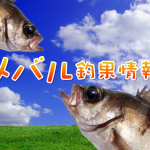 ゴールデンウィークに入りメバルの活性は?!東京湾奥のメバル釣果情報(集計期間:2015年4月23日~4月29日)