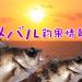 ゴールデンウィーク終了!気になるメバルの動向は?!東京湾奥のメバル釣果情報(集計期間:2015年4月30日~5月6日)