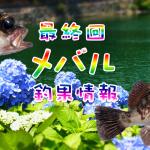 最終回メバル特集!関東も梅雨入りカウントダウン?!東京湾奥のメバル釣果情報(集計期間:2015年5月28日~6月3日)