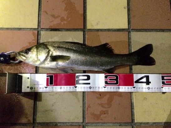 フッコ 48cm