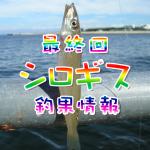 シロギス釣果情報