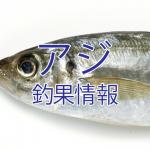 シルバーウィークは手軽なサビキ仕掛けでアジを釣ろう!東京湾陸っぱりアジ釣り釣果情報(2015年9月10日~9月16日)