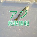 シルバーウィーク終盤戦?!東京湾陸っぱりアジ釣り釣果情報(集計期間:2015年9月17日~9月23日)