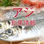 味覚の秋到来でアジ達は?!東京湾陸っぱりアジ釣り釣果情報(集計期間:2015年9月24日~10月7日)