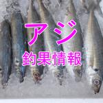 今秋のアジは好調?!東京湾陸っぱりアジ釣り釣果情報(集計期間:2015年10月8日~10月14日)
