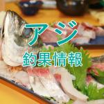 アジ釣りシーズンも終盤戦か?!東京湾陸っぱりアジ釣り釣果情報(集計期間:2015年10月15日~10月21日)