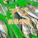ハロウィンでオバケなアジ?!東京湾陸っぱりアジ釣り釣果情報(集計期間:2015年10月22日~10月28日)