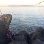 新ロッドでリベンジ釣行?!今週も若洲海浜公園へ朝釣りに行ってみました。