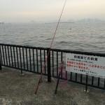 短時間のファミリー釣行?!若洲海浜公園へ夜釣りに行ってみました。