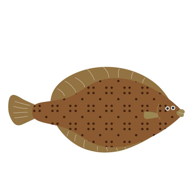 カレイ釣果情報