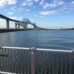文化の日に短時間釣行?!若洲海浜公園へ朝釣りに行ってみました。