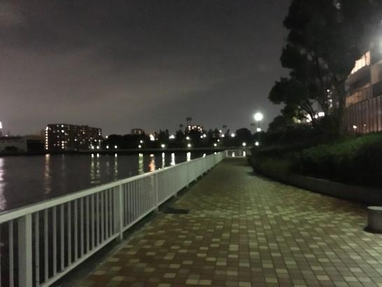 辰巳一丁目 夜釣り