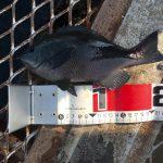 梅雨入りで蒸し暑い釣行?!大混雑の大黒海づり施設へ朝釣りに行ってみました。