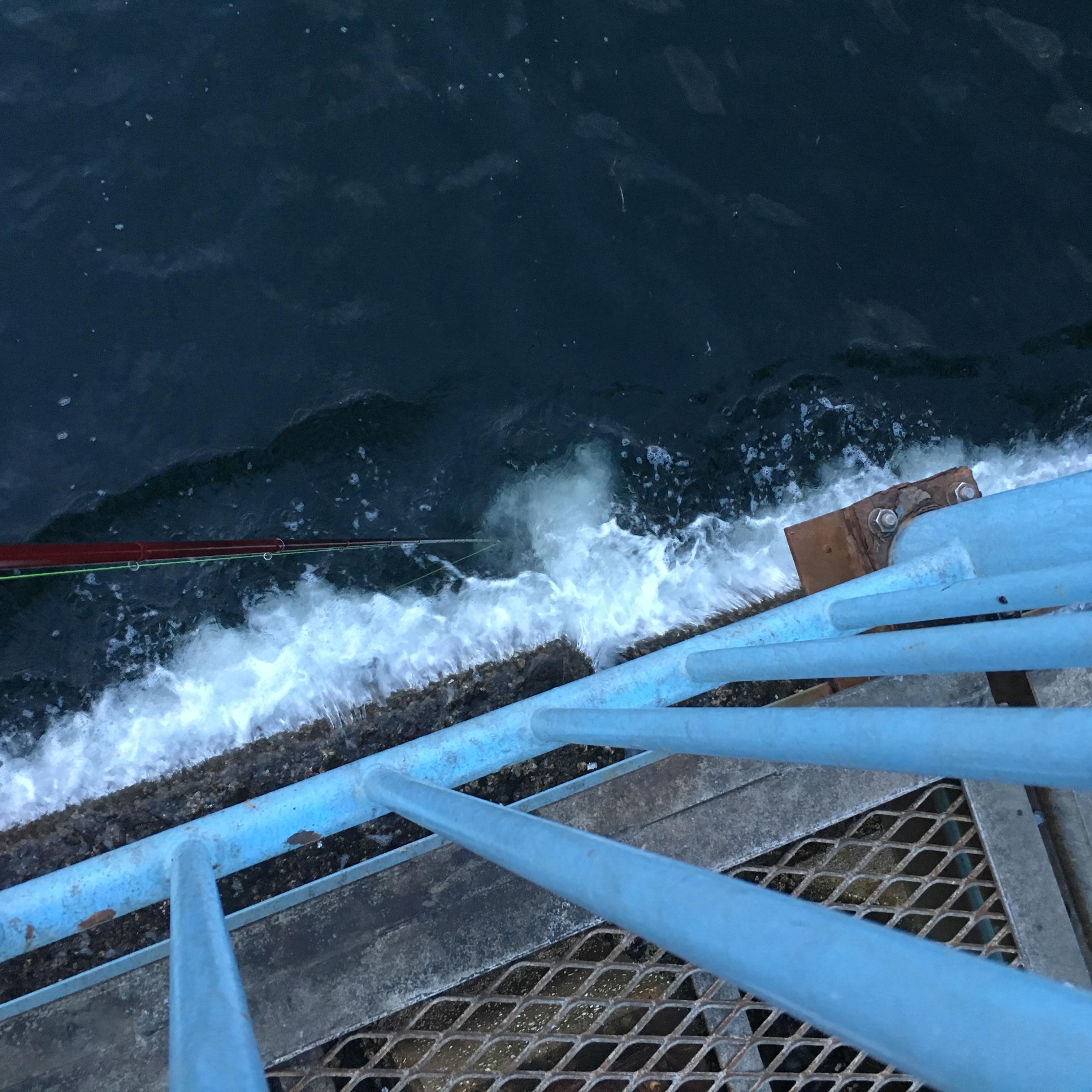 大黒海づり施設 ヘチ釣り