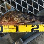 残暑の釣行?!混雑中の大黒海づり施設へ釣りに行ってみました。