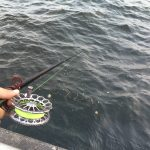 シルバーウィーク突入でまさかの釣り場に入れない?!大黒海づり施設からの東扇島西公園へ釣りに行ってみました。
