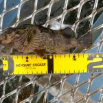 シルバーウィークも中盤戦?!敬老の日に大黒海づり施設へ朝釣りに行ってみました。