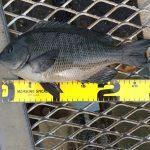 今年も残り3ヶ月で秋の釣りに突入?!神無月の大黒海づり施設へ朝釣りに行ってみました。