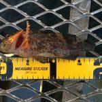 秋本番?!温冷の激しいの大黒海づり施設へ釣りに行ってみました。