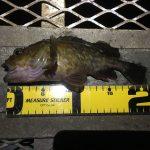 営業時間延長のイベントで18時まで釣りができる?!11月上旬の大黒海づり施設へ夜釣りに行ってみました。