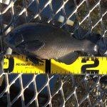 2016年の釣り納め?!年末の大黒海づり施設へ朝釣りに行ってみました。