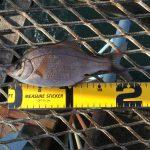 水温低下で釣果は?!平日の大黒海づり施設へ釣りに行ってみました。