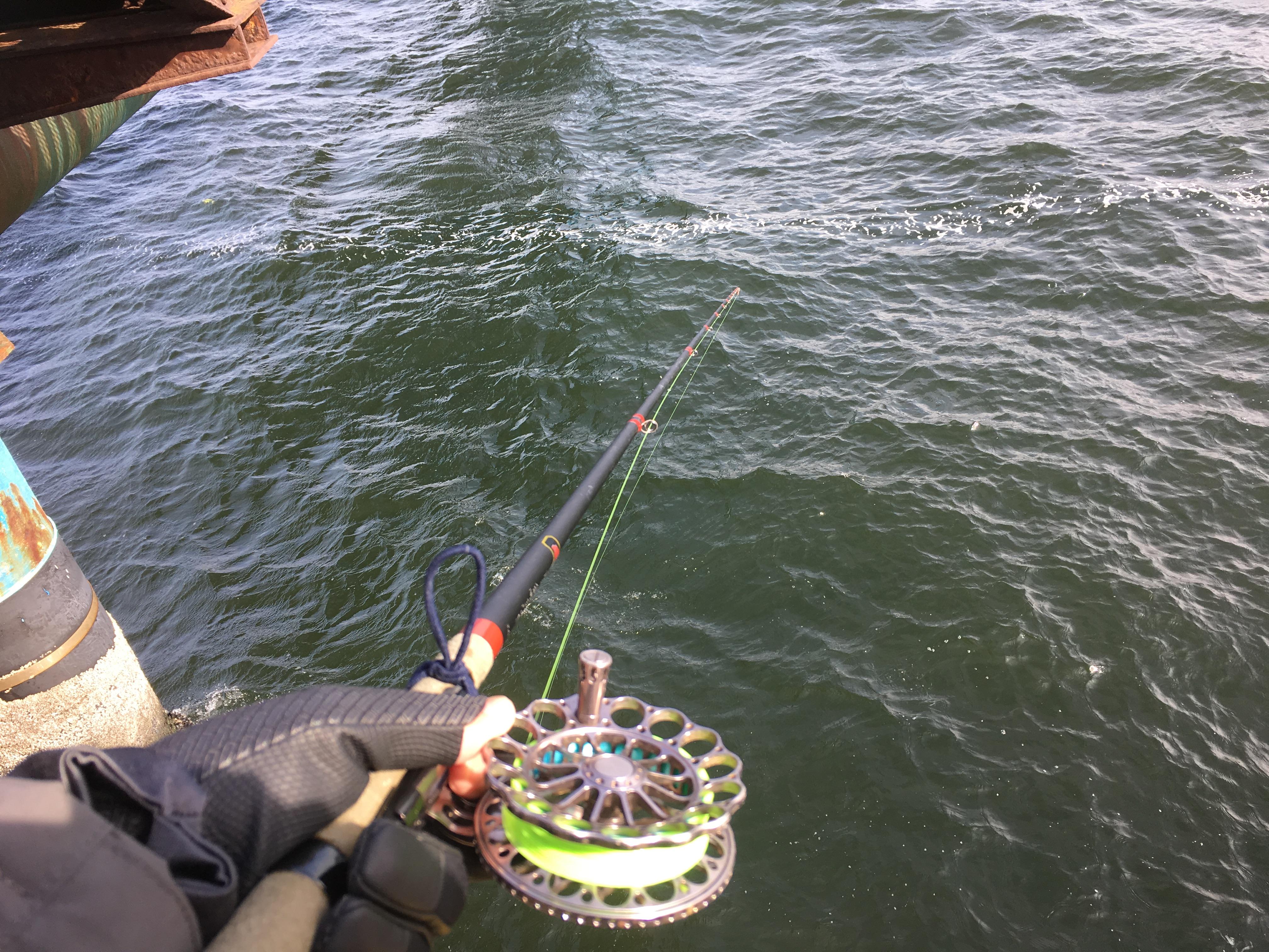 本牧海づり施設 ヘチ釣り