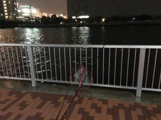 辰巳橋 ウキ釣り