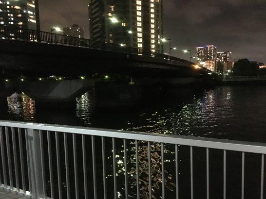 辰巳橋 夜釣り