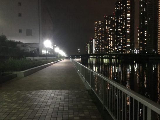 辰巳 夜釣り