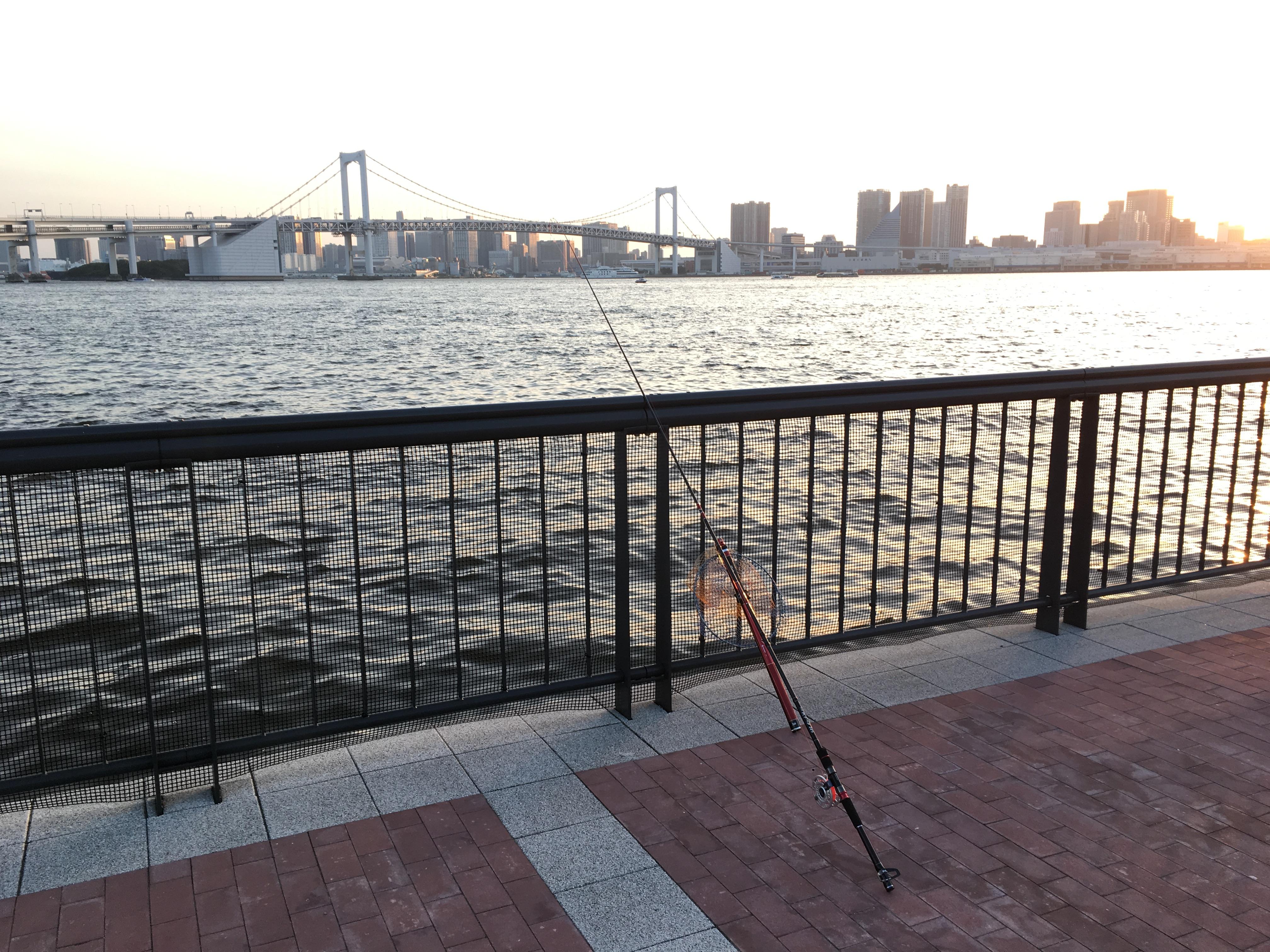 豊洲ぐるり公園 ヘチ釣り